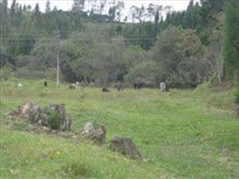 Lote en Predio Rural,  Guarne,  87124