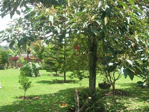 Finca Recreativa en V. Llanogrande,  Rionegro,  67404